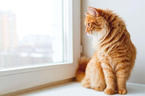 Kucing Peliharaan di Australia Barat Mungkin Bakal Dilarang Keluar Rumah