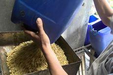 Kementan Targetkan Produksi Kedelai Lokal Capai 500.000 Ton