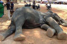 Gajah Mati usai Angkut Turis, Tahun 2020 Angkor Wat Larang Wisata Tunggang Gajah