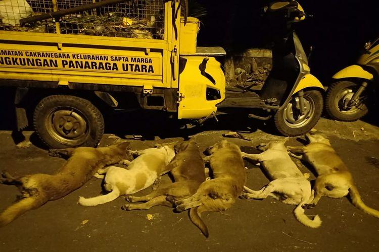 Anjing liar di kota Mataram yang dieliminasi untuk mengantisipasi penyebaran rabies sampai ke Kota Mataram, Senin (18/2/2019).