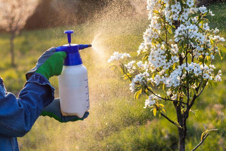Ilustrasi menyemprotkan pestisida, fungisida.
