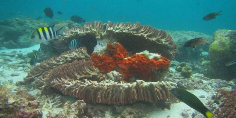 Terumbu karang yang rusak karena kapal Inggris Caledonian Sky terjebak di perairan dangkal Raja Ampat.