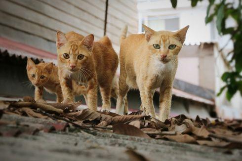 Kucing Tiba-tiba Berjalan Mundur, Ternyata Bisa Karena Penyakit