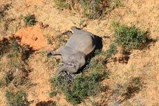 Kematian Ratusan Gajah di Botswana Masih Misteri, Hasil Tes Tidak Meyakinkan