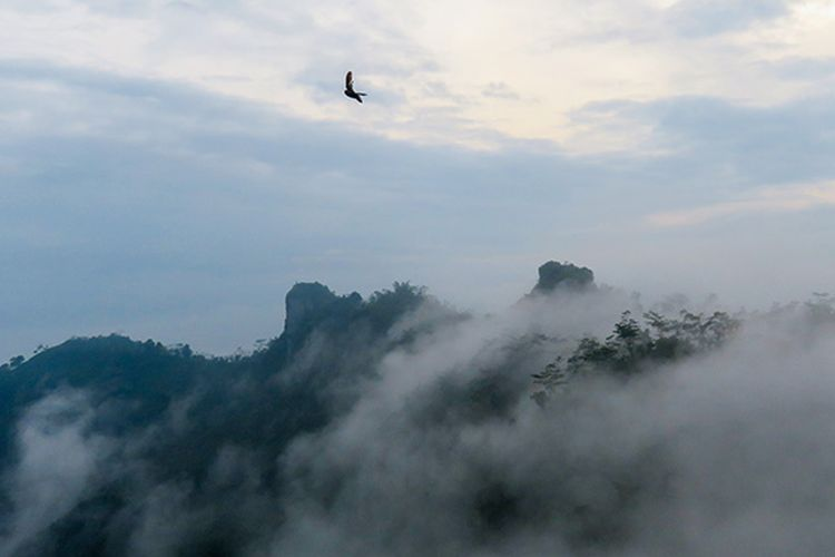 Samudera kabut di Puncak Suroloyo, Perbukitan Menoreh