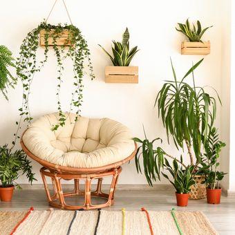 Beberapa jenis tanaman tak sekadar mempercantik ruangan, tetapi juga dapat membantu meredakan alergi dengan mengusir alergen yang ada di rumah.