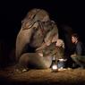 Sinopsis Water for Elephants, Kisah Cinta Robert Pattinson dan Reese Witherspoon