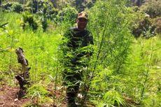 Sativa Nusantara: Mendesak, Legalisasi Ganja sebagai Tanaman Obat