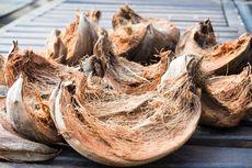 Manfaat dan Kegunaan Sabut Kelapa untuk Tanaman