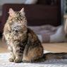 Cara Merawat Kucing yang Sudah Tua dan Memastikannya Nyaman