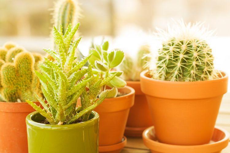 Ilustrasi pot terakota, pot tanaman terakota.