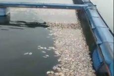 Fenomena Puluhan Ton Ikan Mati Mendadak di Sejumlah Waduk di Jabar, Ternyata Ini Penyebabnya