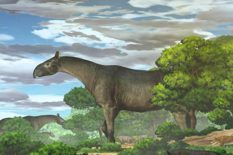 Paraceratherium.