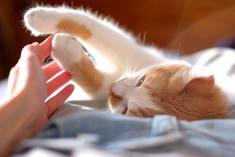 ilustrasi hotel kucing DOK. Shutterstock