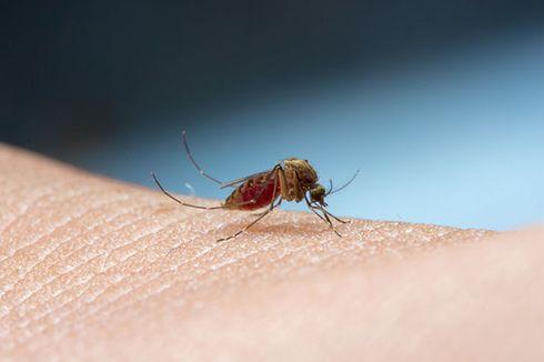 Cara Mudah Mengusir Nyamuk dengan Bahan Alami