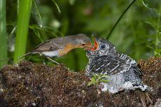 Habitat Makhluk Hidup dan Komponennya