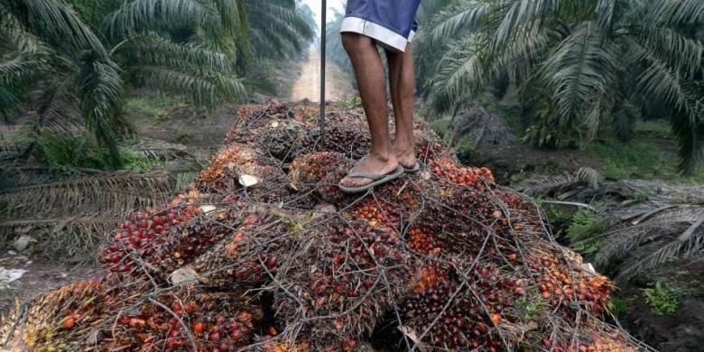 Seorang pekerja berdiri di atas tumpukan kelapa sawit di atas truk di daerah perkebunan kelapa sawit di Pelalawan, Riau, 16 September 2015.