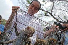 Disebut Pengepul Monyet, Jokowi Tertawakan Kritik Qomar