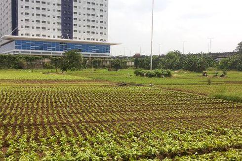Berkebun Sayur di Tengah Kota...