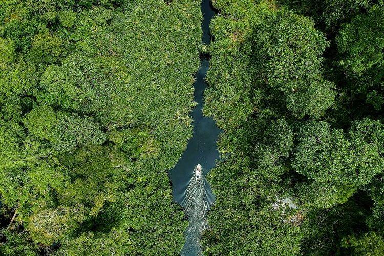 Hutan Gambut utuh terbesar di Sumatera.