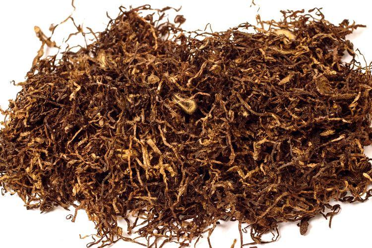 Ilustrasi tembakau kering.