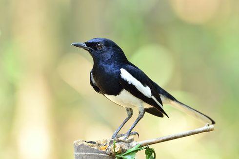 Indonesia Urutan ke-4 Negara dengan Jumlah Burung Terbanyak di Dunia