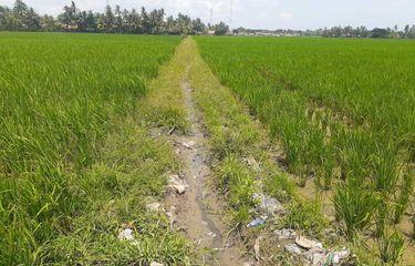 Sawah di Kecamatan Pakisjaya , Kabupaten Karawang kekurangan suplai air.