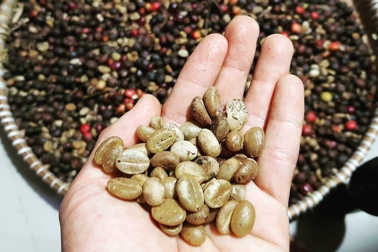 Proses pemilahan biji kopi Kopi Kampoeng Genting yang sudah diproses natural proses, green bean yang berkualitas baik