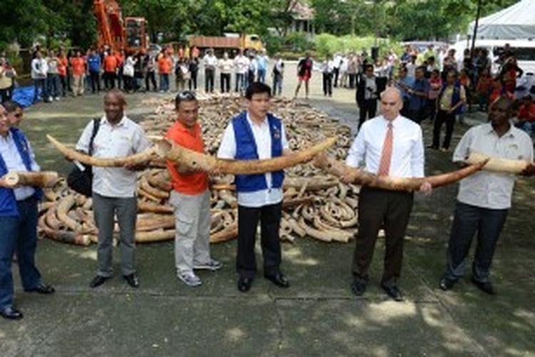 Para pejabat Filipina memamerkan gading gajah ilegal yang berhasil disita aparat keamanan negeri itu dalam beberapa tahun terakhir. Akhir pekan lalu, Filipina memusnahkan lima ton gading gajah ilegal dengan harapan bisa memperbaiki citra negeri itu yang dikenal sebagai negara transit gading gajah ilegal dari Asia atau Afrika menuju ke China.