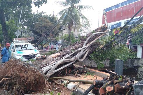 Hujan dan Angin Kencang, Pohon Mahoni Tumbang Timpa Kabel Listrik