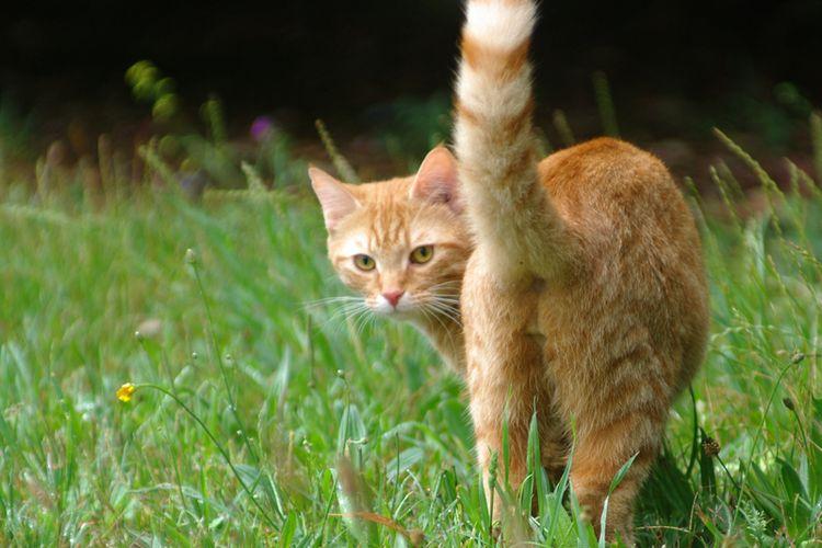 Gerakan ekor kucing ternyata punya arti yang berbeda-beda.