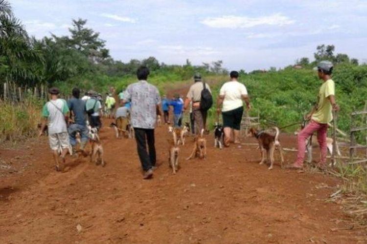 (Ilustrasi) Pemburu babi bersiap berangkat bersama anjing-anjing yang telah terlatih.