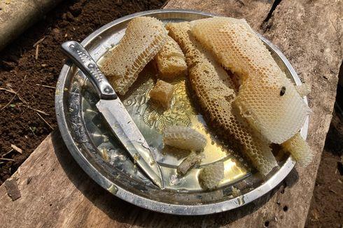 Rute Menuju Eduwisata Lebah Madu Bogor di Lembah Kaki Gunung Pangrango