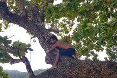 Serunya Hari Pohon Sedunia Diperingati dengan Memeluk Pohon
