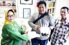 Kesal dengan Sapi yang Berkeliaran, Warga Bawa Kotoran ke DPRD Palopo