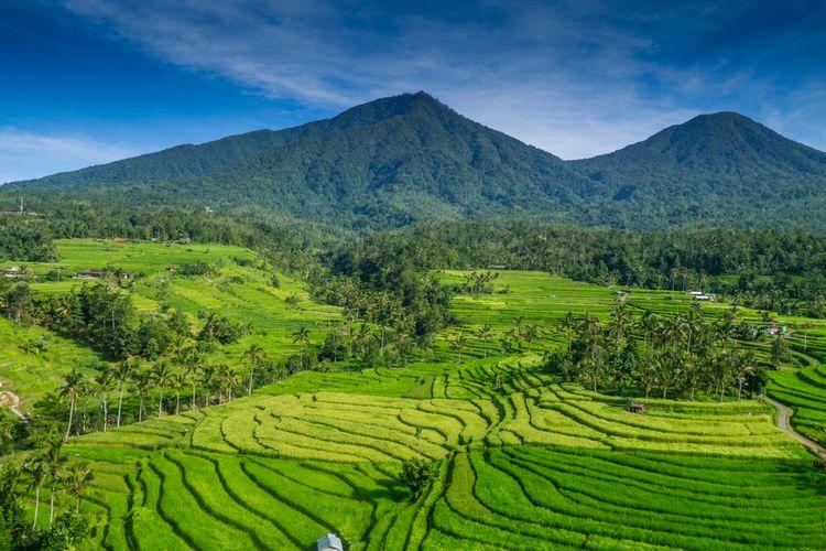 Ilustrasi subak Jatiluwih, Bali.