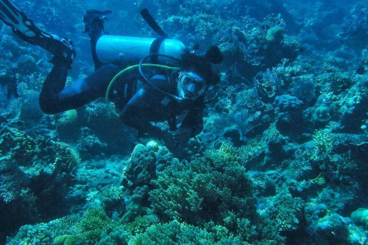Menyelam di Pulau Togean.