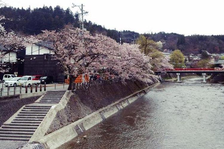 Keindahan kawasan Nakabashi Bridge di Takayam pada saat bunga sakura bermekaran