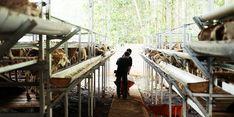 Jelang Idul Adha, Sentra Ternak Dompet Dhuafa di Lampung Siapkan 1.000 Hewan Kurban