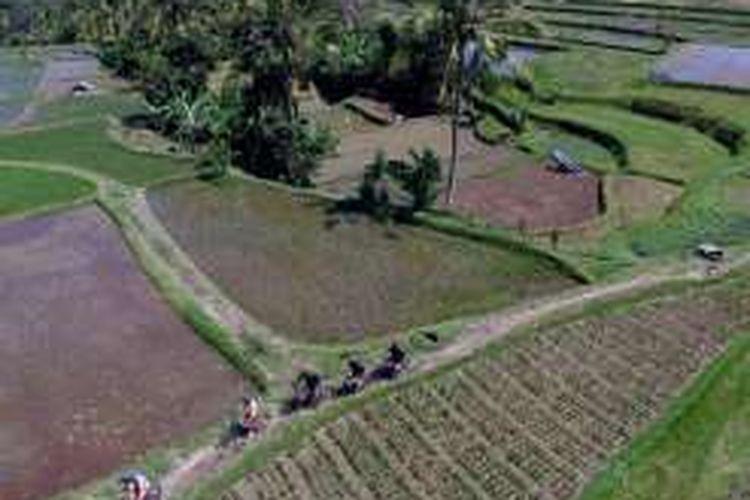 Bersepeda menelusuri pedesaan dan pematang sawah di Ubud, Gianyar, Bali, Sabtu (19/3/2016).