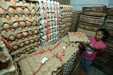 Harga Telur Ayam di Jakarta Anjlok Lagi, Pecah Rekor Terendah Hari Ini
