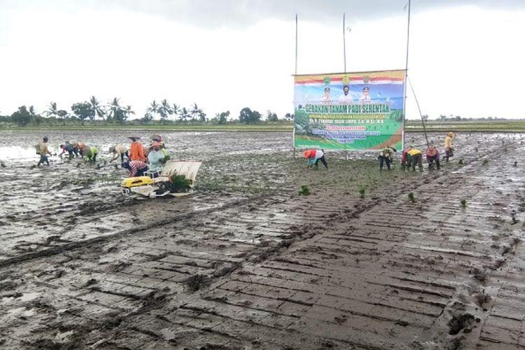 Menteri Pertanian Syahrul Yasin Limpo, saat mengikuti tanam padi serentak, di Blok A Desa Belanti Siam, Kecamatan Pandih Batu, Kabupaten Pulang Pisau.