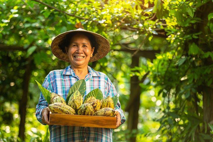 dengan kerja keras, kini petani kakao dan Koperasi KSS kembali  mendapat pesanan sekaligus penambahan buyer di Belanda (Biji Kakao Trading LTD).