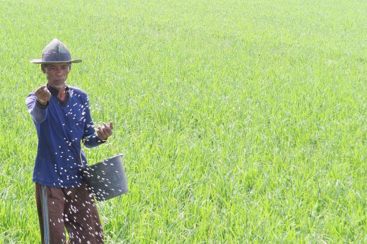 Kementandiminta mendesain pola penyaluran pupuk bersubsidi langsung kepada petani.