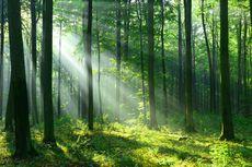 Duduk Perkara Hutan Sakral Warga Baduy Dirusak Penambang Emas Liar, 2 Hektar Digunduli