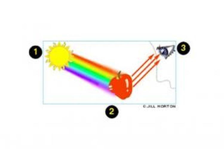 Ilustrasi cara mata melihat warna.