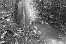Mayat Tergantung di Hutan Kota Kramat Jati, Ditemukan Surat Penyesalan
