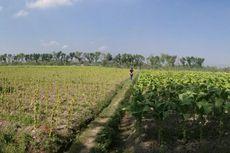 Pengaruh Keunggulan Tanah bagi Kegiatan Ekonomi