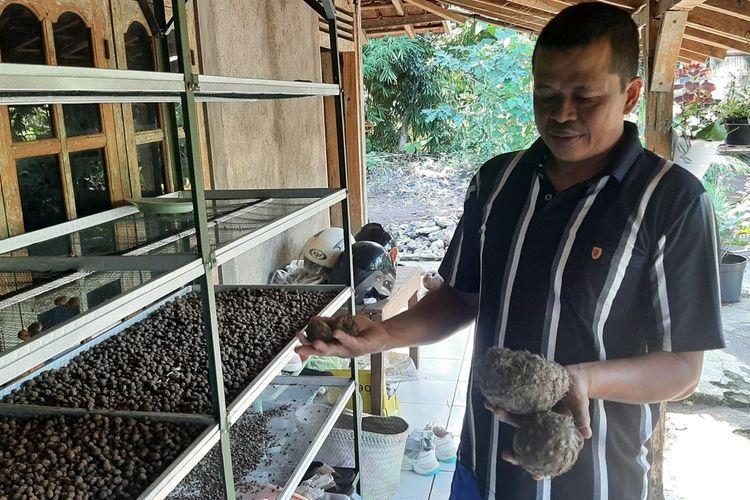 Senen Menunjukkan Umbi Porang di Rumahnya di Kapanewon Karangmojo, Gunungkidul Selasa (20/4/2021)