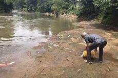 Anak Bulus Dikembalikan ke Sungai Ciliwung, Belum Langka tapi Penting untuk Ekosistem